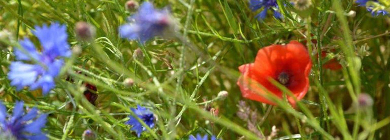 Blommor vid camping Visby Strandby